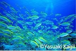 鍵井靖章(かぎいやすあき)さん撮影の水中写真